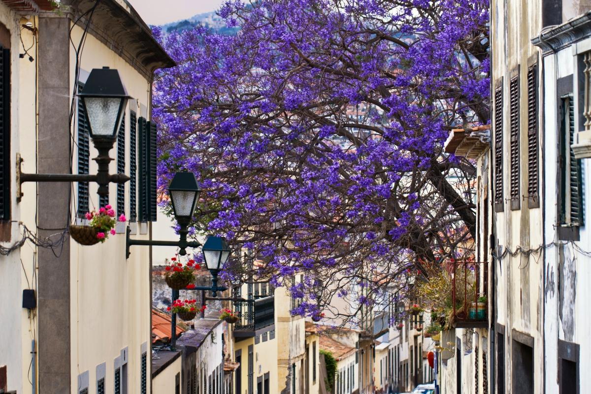 Madeira fővárosa, Funchal