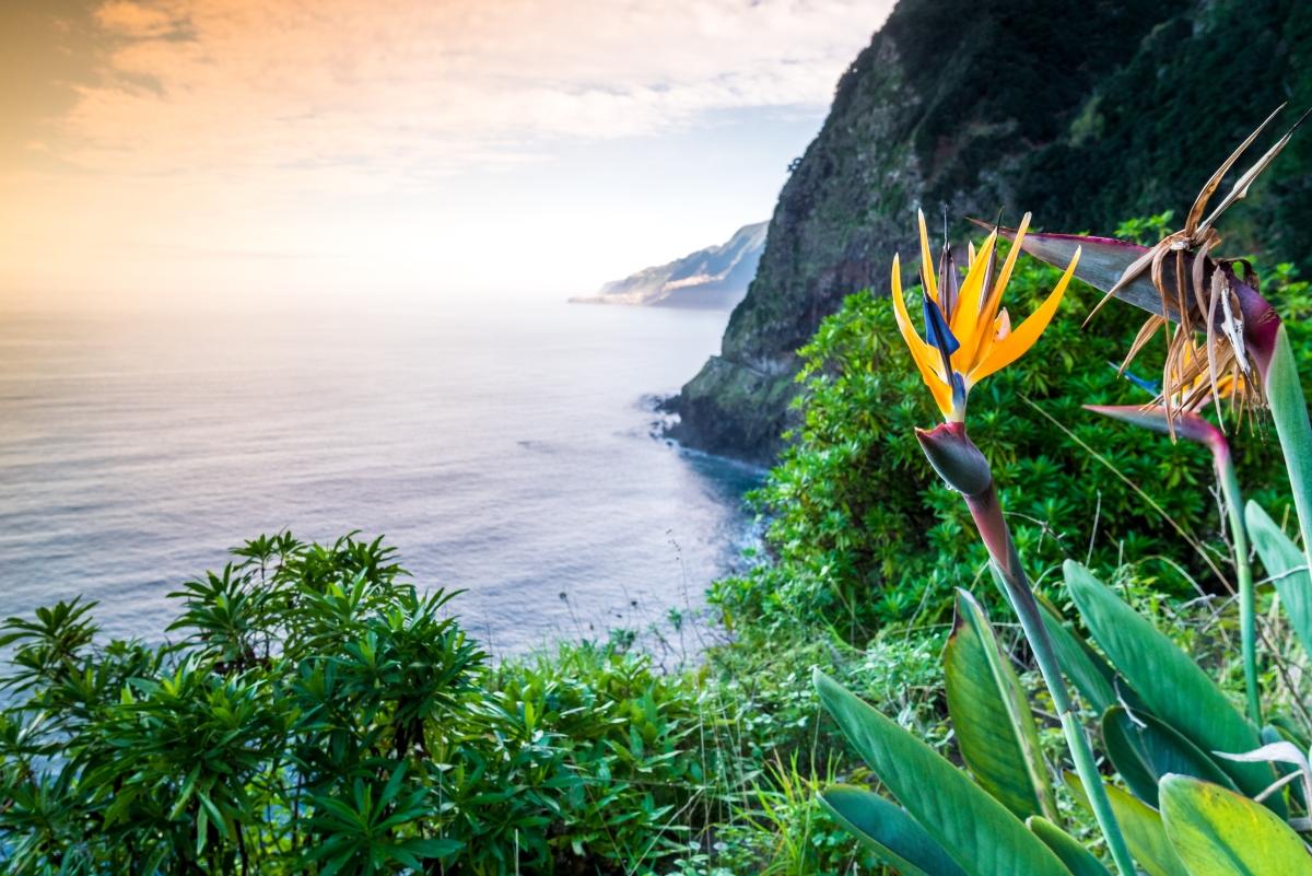 Madeira jelképe, a papagájvirág