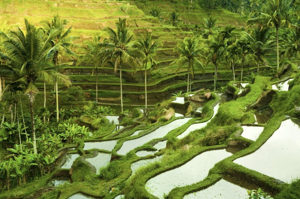Riszteraszok Balin
