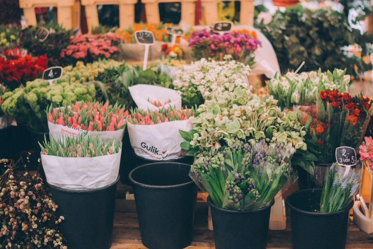Amszterdam-tulipan